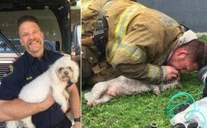 bombero-perro-mascota-3-min-800x496